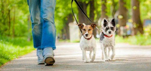 Дозвољено извођење кућних љубимаца у шетњу сваког дана у периоду од 20 до 21 час